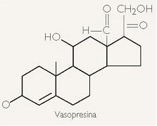 Hormonas - Composición Química y Transporte