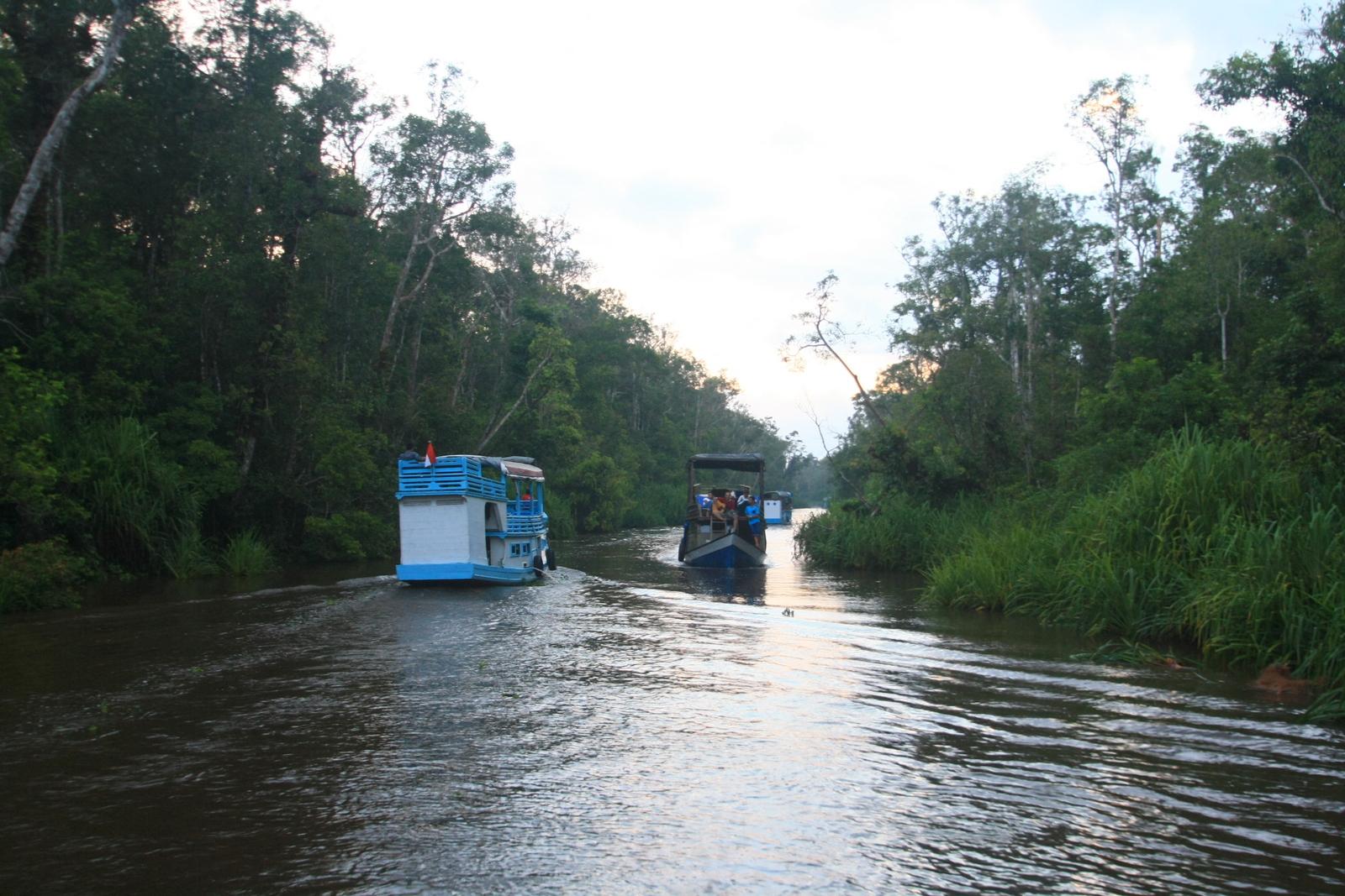 Cruising Black water river by klotok