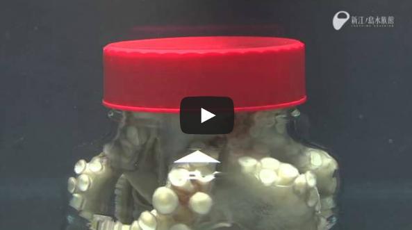 الأخطبوط يخرج من وعاء مغلق