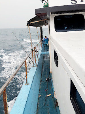 km singa laut