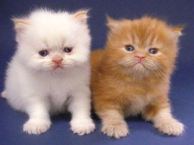 2 gambar kucing lucu