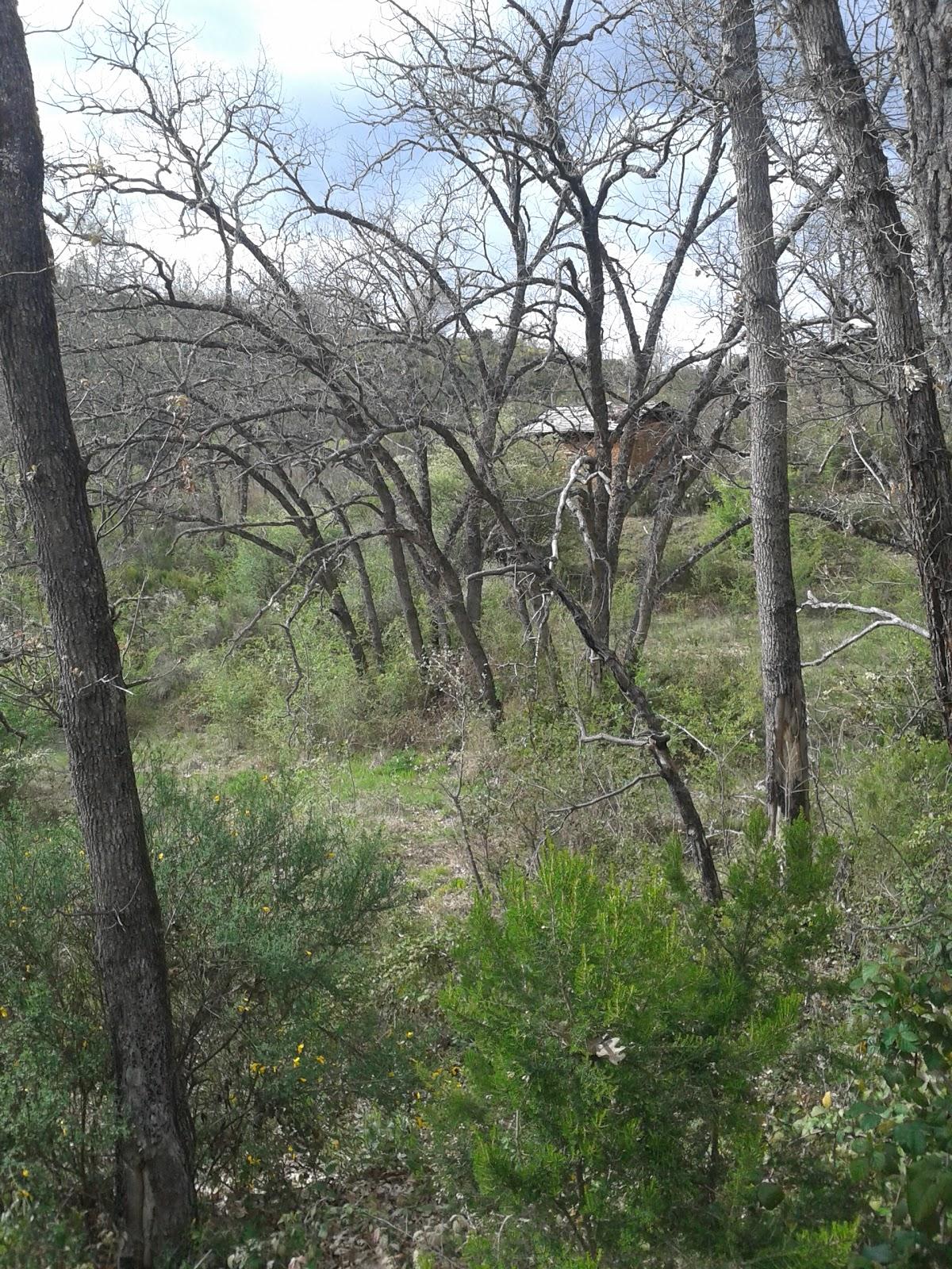 Intimo y personal la casita en el bosque - Casitas en el bosque ...
