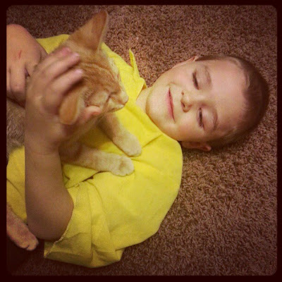 kittens cats kids cuddles pets