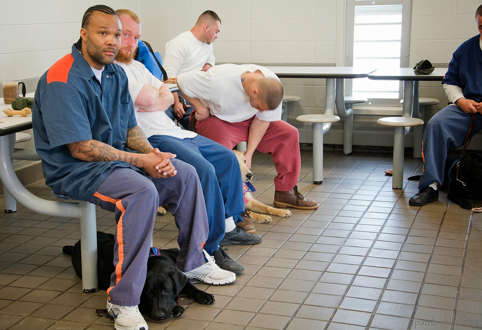 Four men sit on stools attached to a table on the left side of the picture. On man sits just out of view on the right side. The first man is an african american wearing the prison blue uniform. He has this hands clasped on his lap and below him a black lab is lying on the tile floor. The next man is leaning back with his arms folded, he is wearing blue pants and a white t-shirt. The next man is wearing a white t-shirt and light maroon pants. He is leaning over looking down at a golden retriever that is lying under him on the floor. He is petting the puppy with his left hand and his right elbow is on the table. The fourth man is just visible behind the third man, he is wearing a white t-shirt and looking away to the right. The man out of view is wearing the prison blue uniform and hs holding the leash of a black lab that is lying on the floor between his legs.