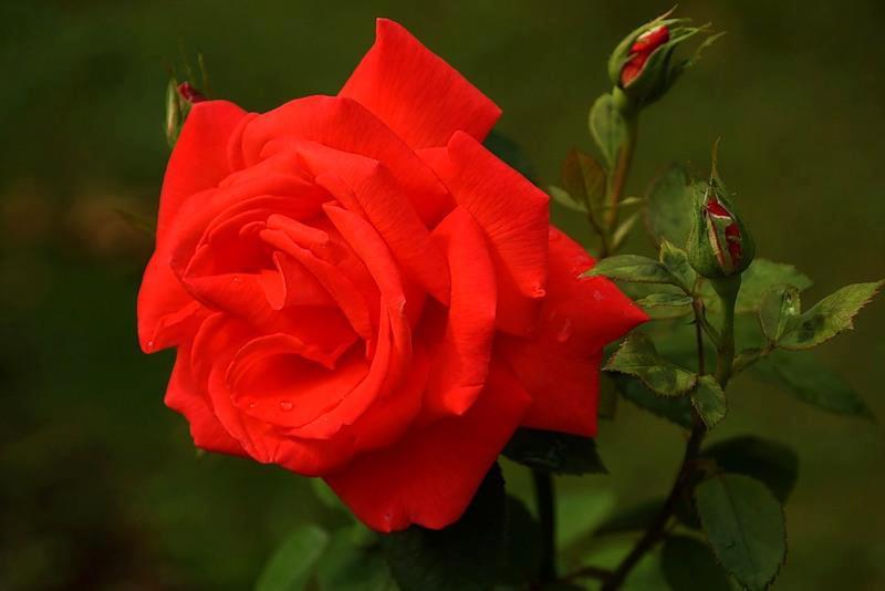 Imagenes De Flores Lindas En Maceta Imagenes de  - Www.Imagenes De Flores Bonitas.Com