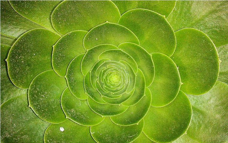 Planta verde en el jardín de mis padres by Antonio Hurtado