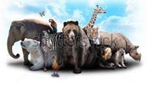 Wild Life Animal