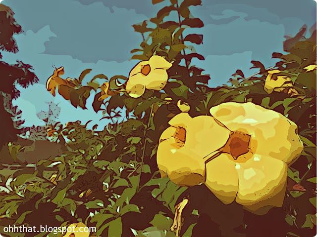 Happy, Flowers, Yellow, Cartoonized