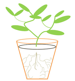 drawing of roots in a plant pot