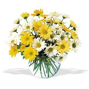 Send a Vase of Daisies