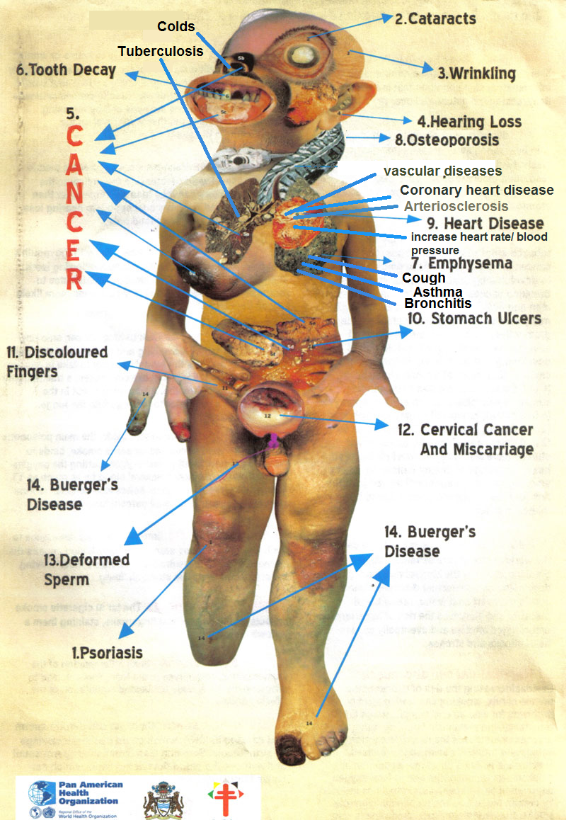 the effects of smoking on our body These are the stages that your body goes through after you've kicked the fag habit.