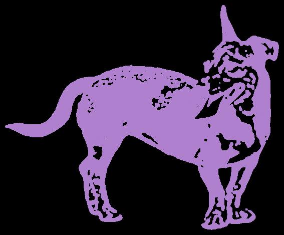 犬・ドーベルマン(動物)