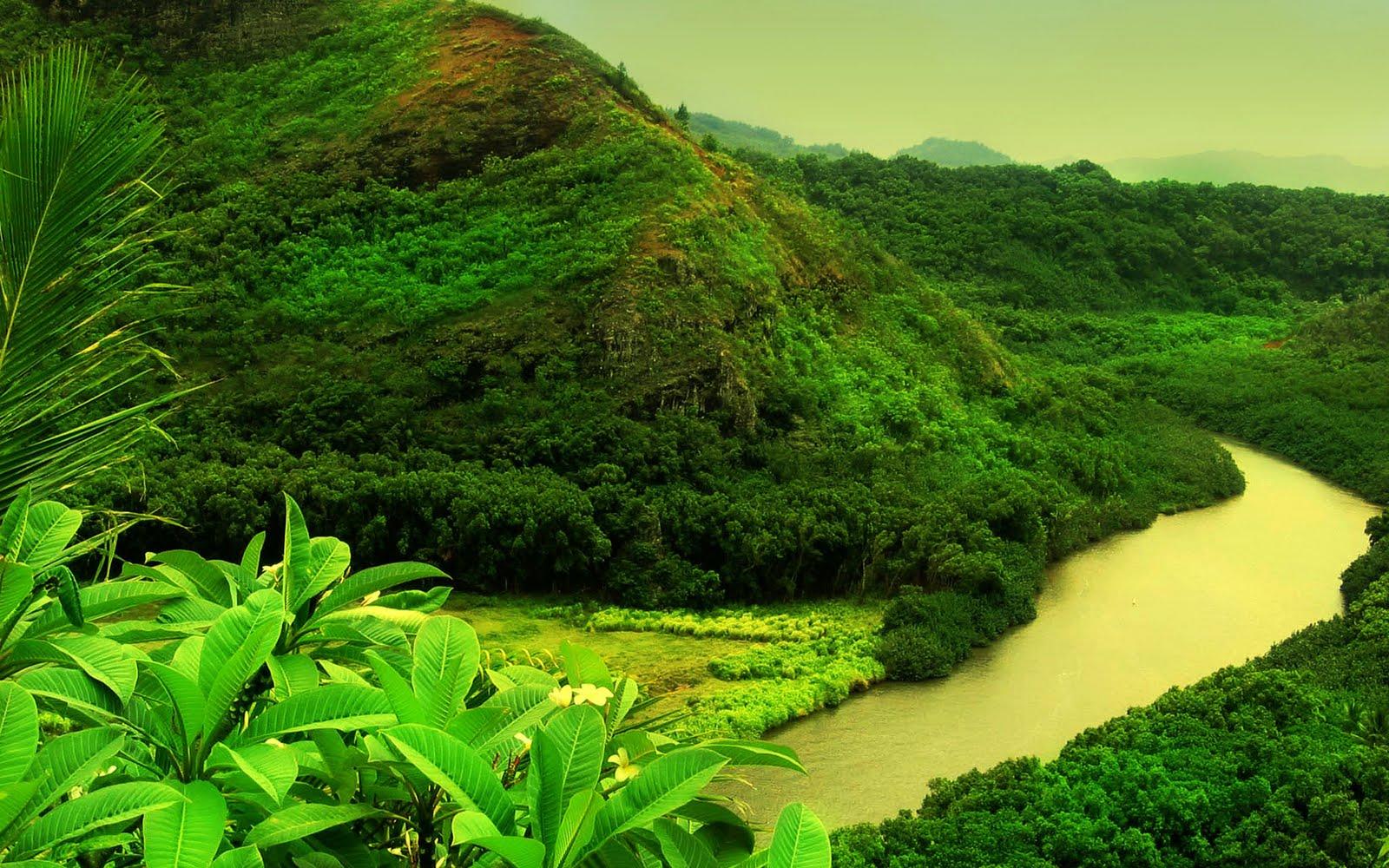 Jungle Forest HD Wallpapers Photos | Desktop Wallpapers