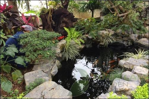 Thi công hồ cá Koi, làm hồ cá Koi, thiết kế hồ cá Koi