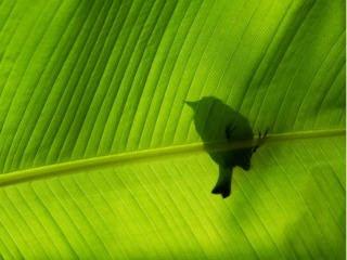 Ptičica download besplatne pozadine slike za mobitele