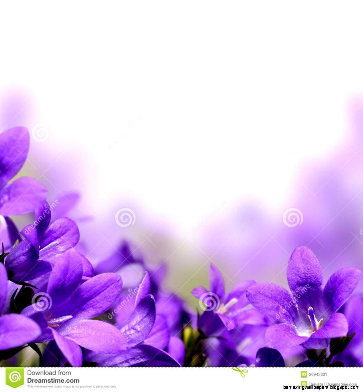 Campanula Spring Flowers Border Stock Image   Image 26942301