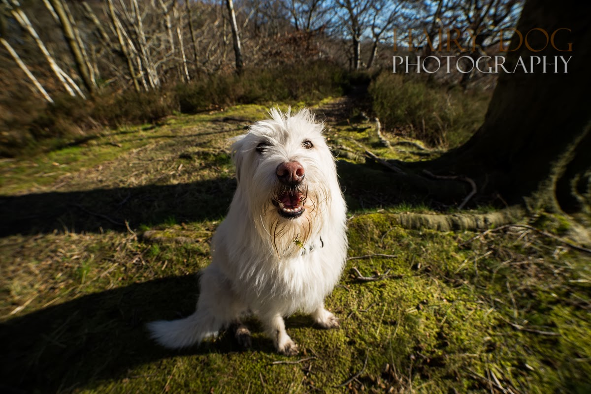 jamie emerson, hairy dog photography, pet photographer north east, durham dog photographer, newcastle pet portraits