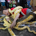 PHOTOS: MY SNAKES ARE SO CHARMING - Man Wraps Himself In Burmese Pythons…One Of The Largest Pythons In The World