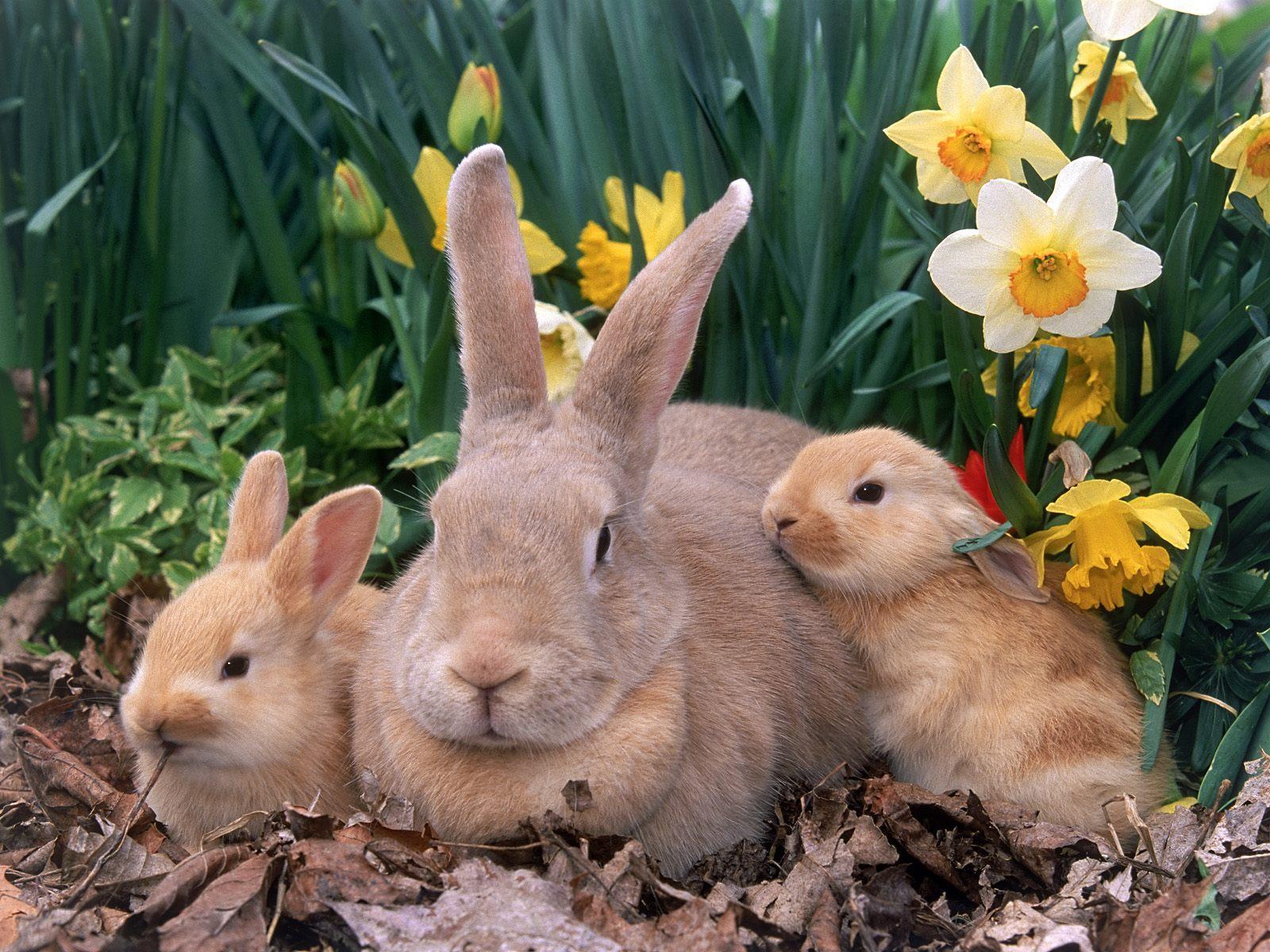 http://3.bp.blogspot.com/-wUoVp1aKSsw/TzSjvrr28uI/AAAAAAAAAZY/KiFIynXC3qc/s1600/Rabbits+Cute+Free+HD+Wallpaper.jpg