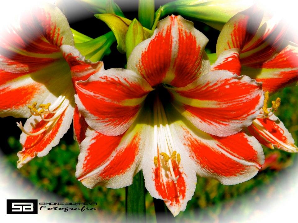 Cores nas flores