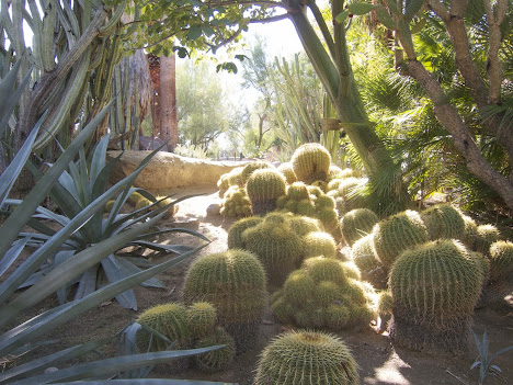 Cacti and Succulents in Palm Springs
