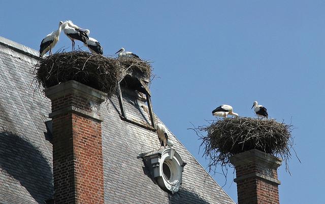 aviar