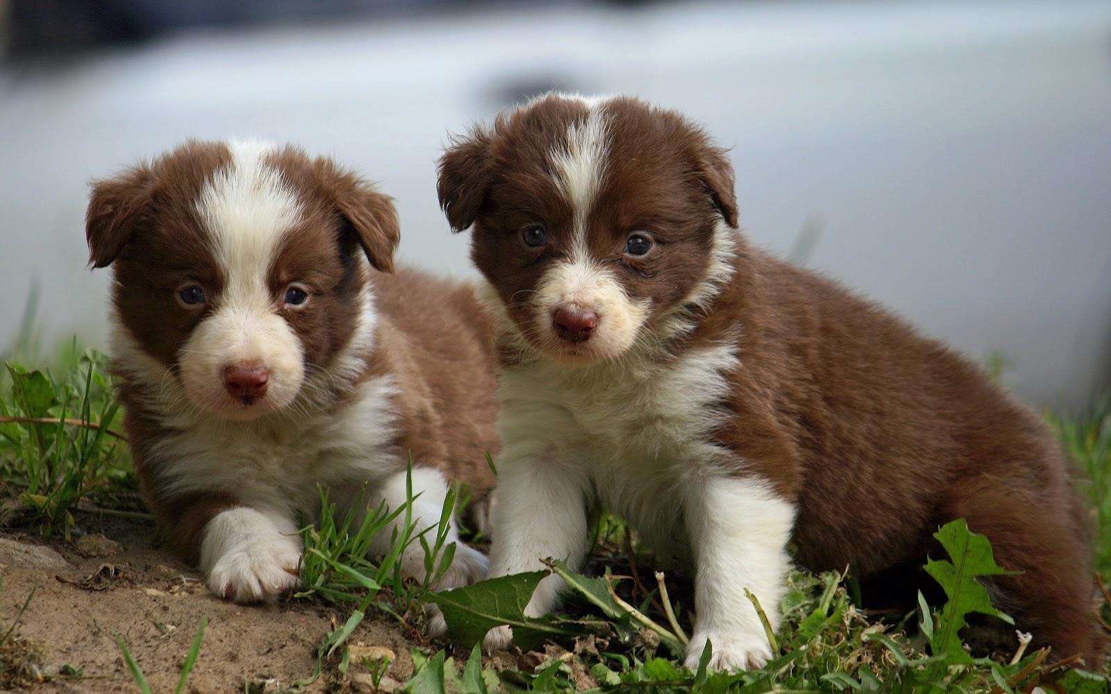Perros Border Collie - Imágenes de Perros en HD | Fotos e Imágenes ...