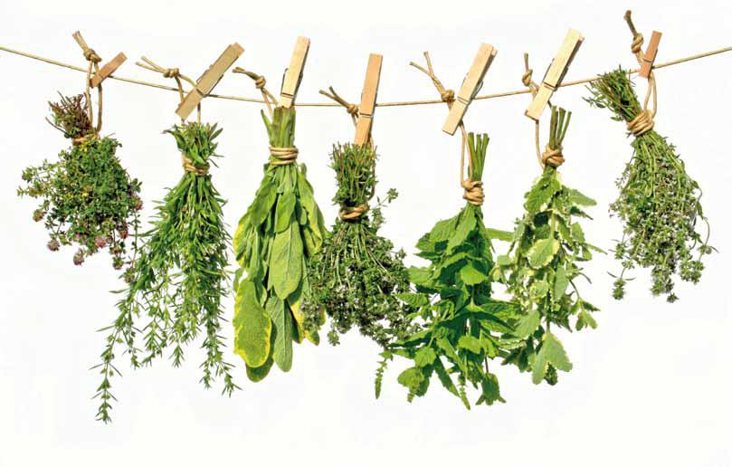 TODOMIKE: Las 230 plantas medicinales más efectivas y sus usos.