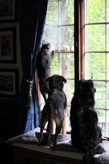 Dogs and cat watching birds
