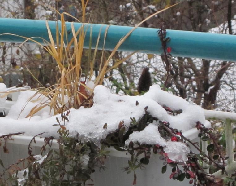 Balkonpflanzen im Winter bei Schnee