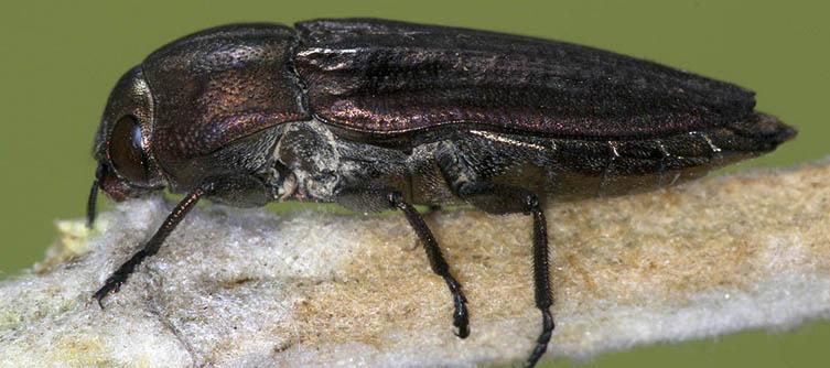 Boletín Sociedad Andaluza de Entomología Vol. 1