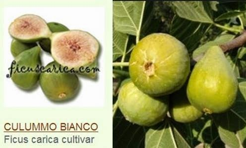 Culummo Bianco Figs