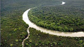 Rain forest in Indonesia, green infrastructure, save forest, reboisasi