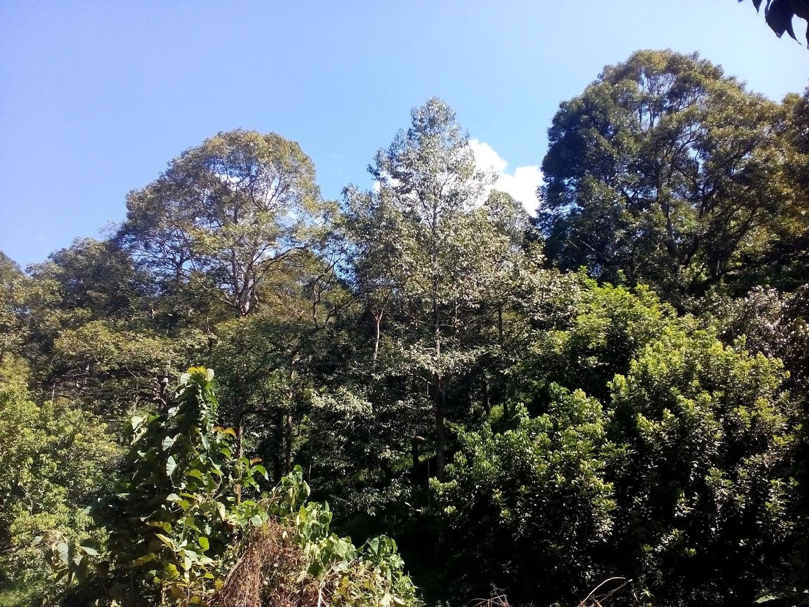 khatulpica adventure malaysia