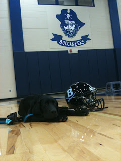Coach is lying down next to a Berkeley football helmet with the Berkeley Buccaneer in the background.