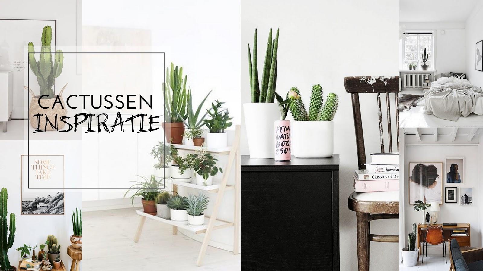 Cactussen in huis voor een tropisch sfeertje   judith huls