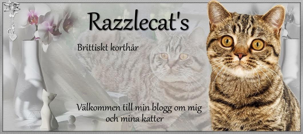 Razzlecat's