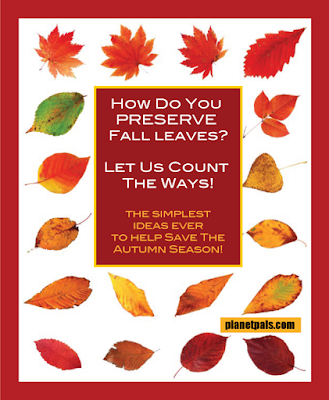 How to preserve Autumn leaves? Let us count the ways. So many and so simple