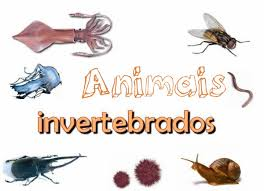 http://engalego.es/curso/lim/ameixas/ameixas.html