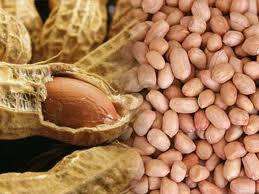 Manfaat Baik Kacang Tanah dan Fungsinya Sebagai Satu Cara Mengatasi Lapar