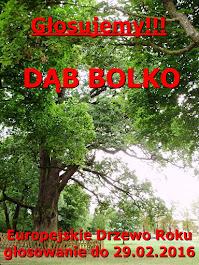 Dąb Bolko-Głosowanie