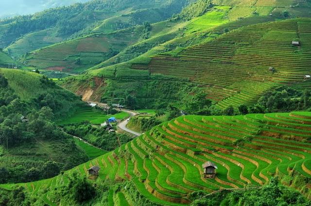 Beautiful Terraced Fields in Vietnam