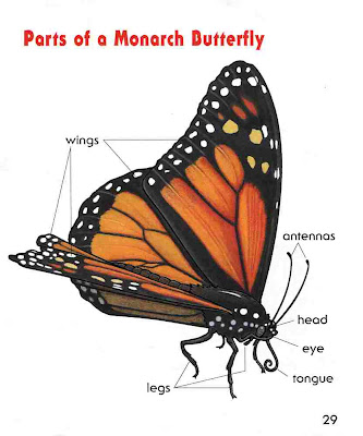 sample page #2 from MONARCH BUTTERFLIES by Laura Hamilton Waxman