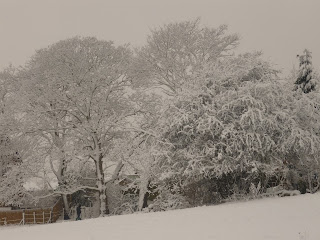 British Trees in the Snow - Own Image