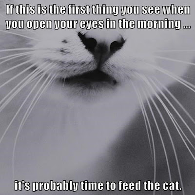 "<a href=""http://cheezburger.com/8557217024"">Then Again, It's Always Time to Feed the Cat</a>"