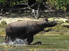 Selamatkan Rhino !
