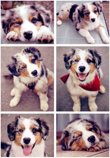 5 Puppies that will make you say Aww