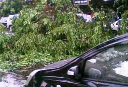 Toyota Harrier was hit by a fallen tree during a thunderstorm