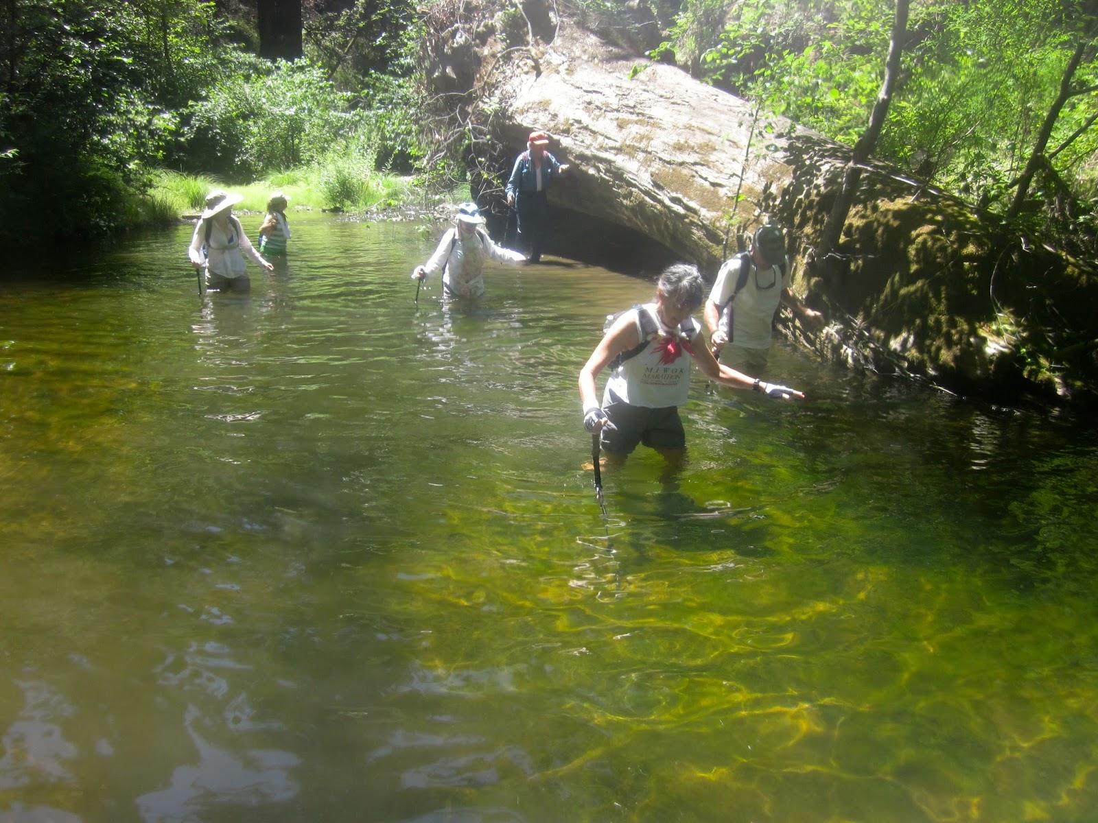 California san mateo county pescadero - Creek Freaking In Pescadero Creek