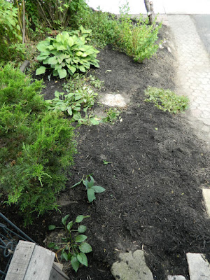 Riverdale front garden cleanup after Paul Jung Gardening Services Toronto